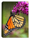 Monarch Brush Stroke - Canvas Art