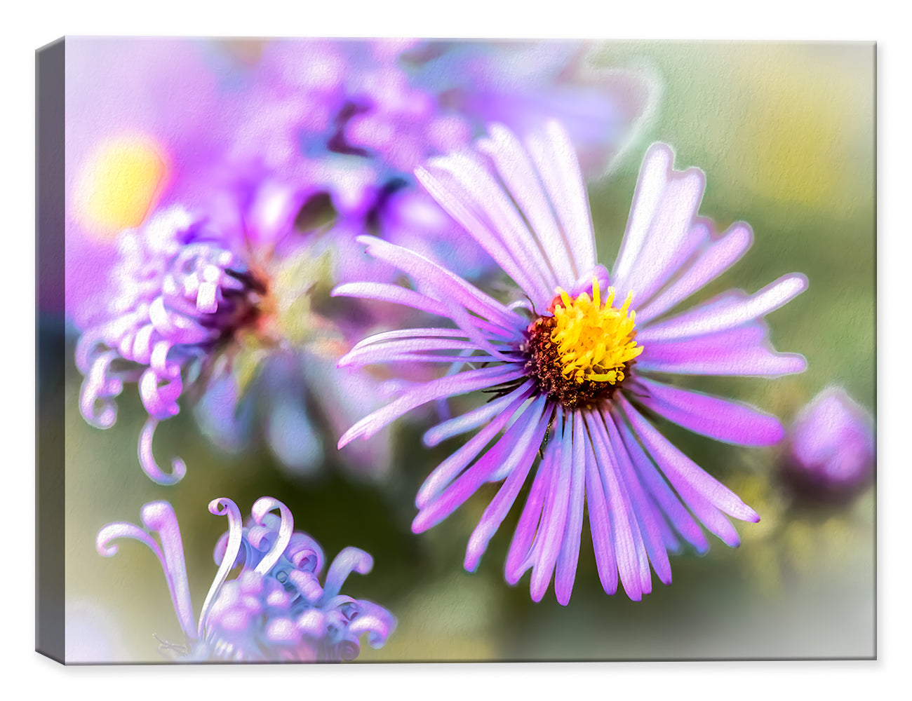 Wildflower - Pastels by Ray Huffman