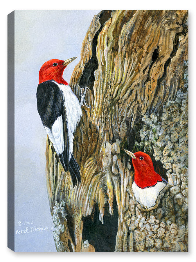 Red Head Woodpeckers and Nest - Canvas Art Plus