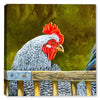 Rooster near the Fence - Canvas Art Plus
