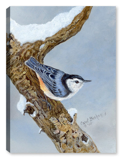 White Breasted Nuthatch on Canvas - Canvas Art Plus