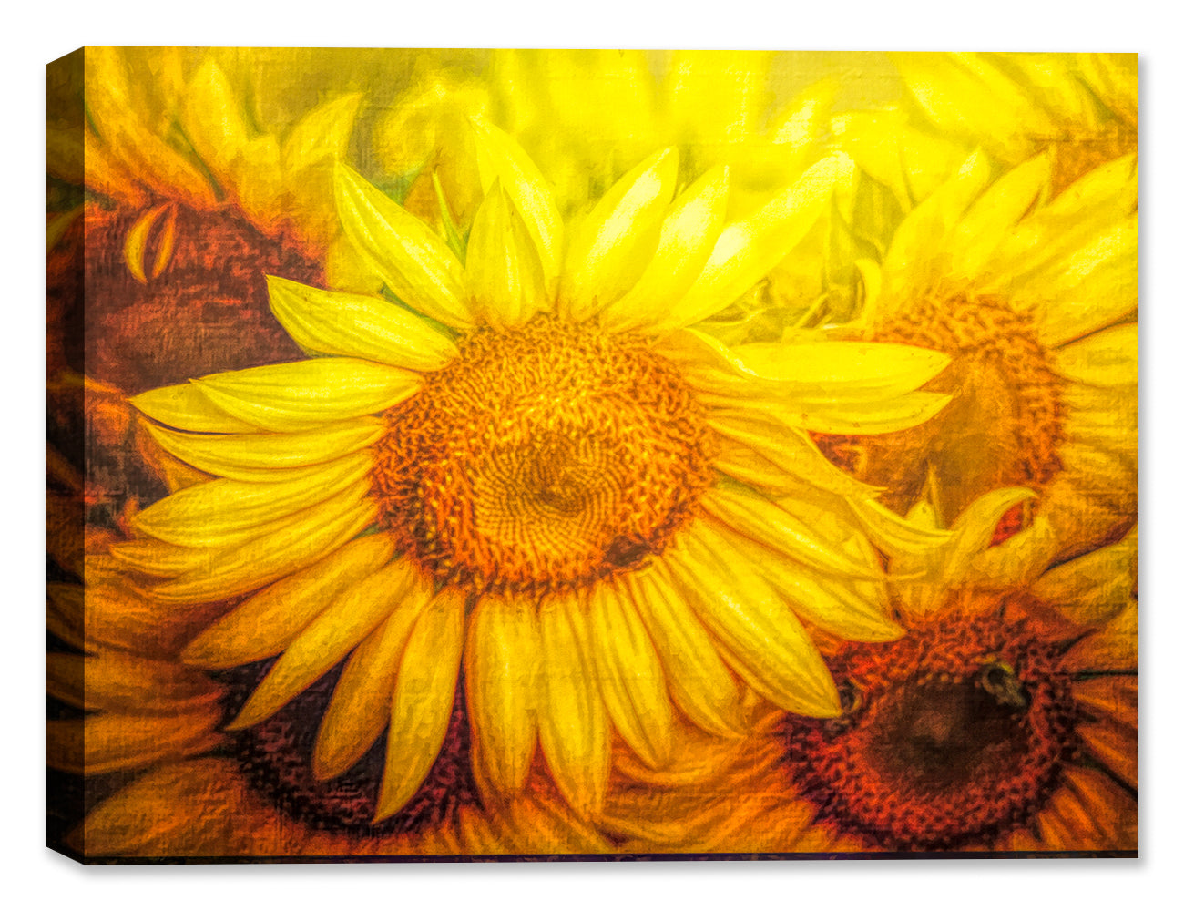 Sunflower Texture - Canvas Art