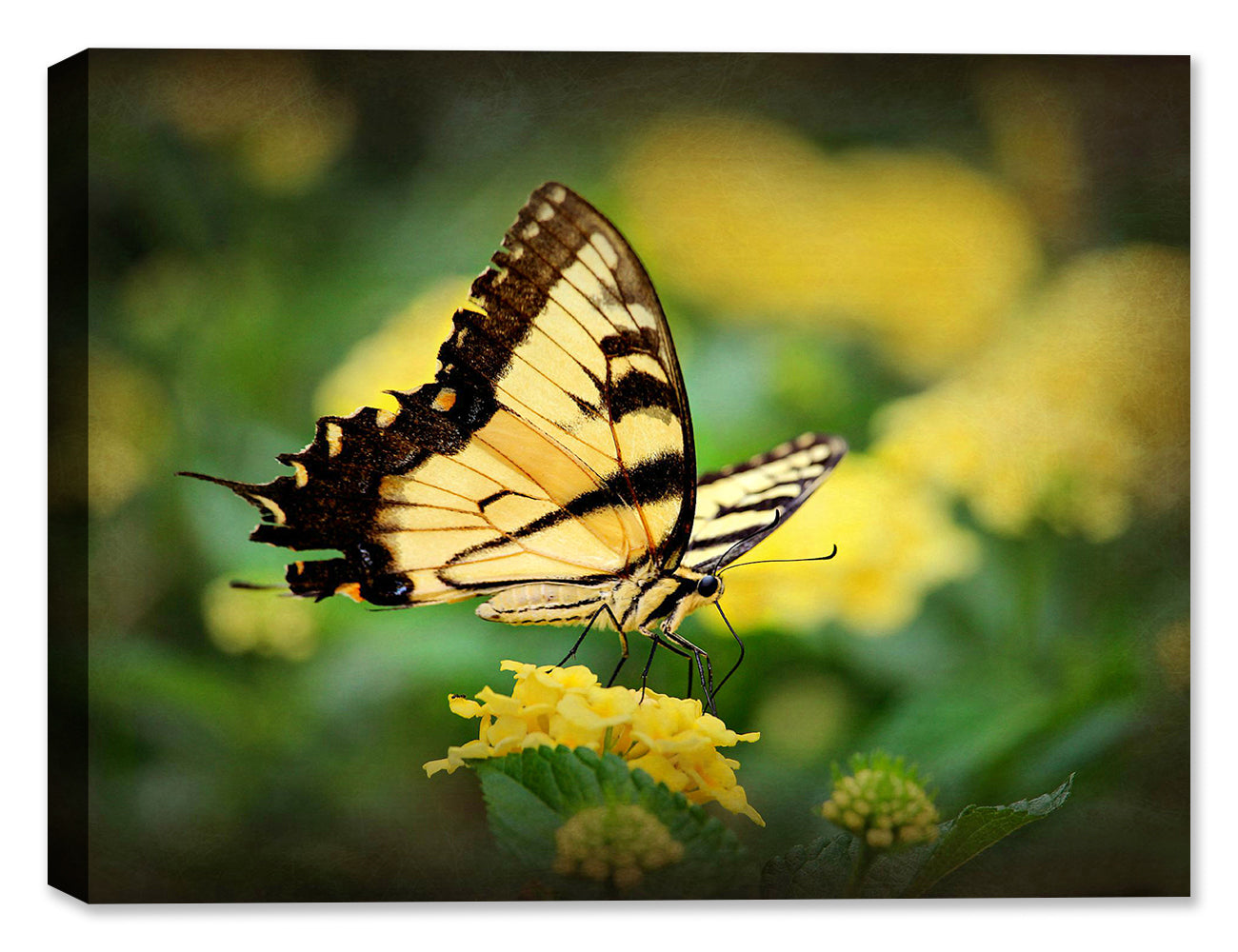 Swallow Tail Yellow - Canvas Art