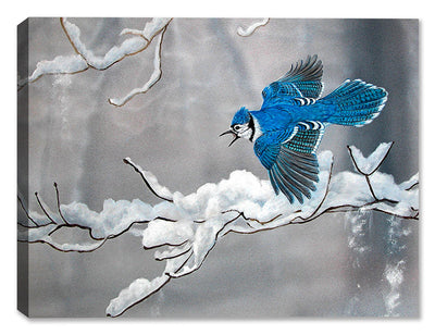 Bluejay in Winter by Carol Decker on Canvas - Canvas Art Plus