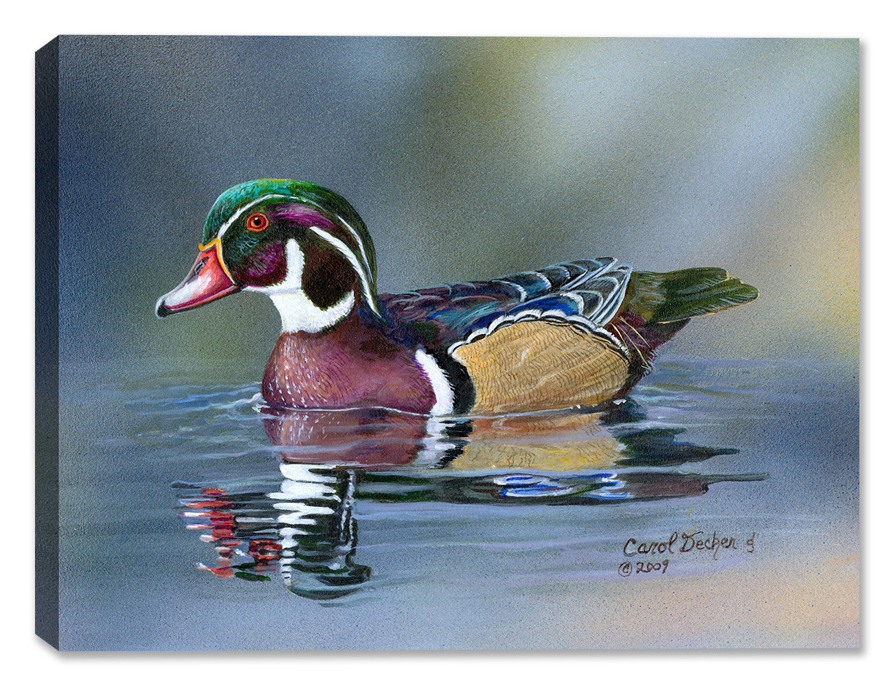 Wood Duck by Carol Decker - Canvas Art - Canvas Art Plus