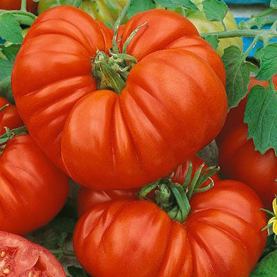 How to Pick the Best Tomato Plant