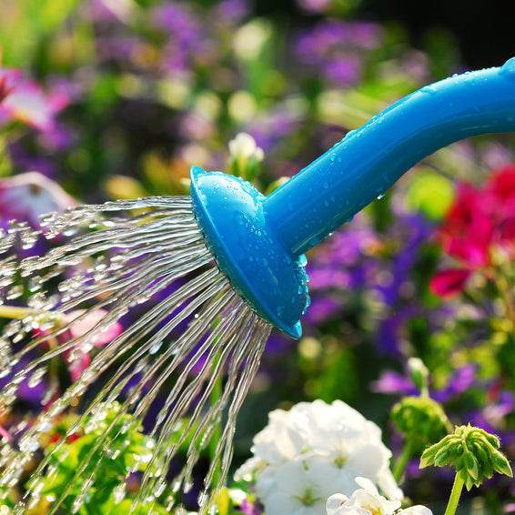 Smart Watering Techniques for Every Garden