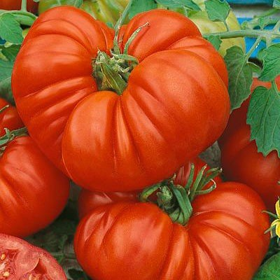 Beefsteak Tomato Plant –Two Plants