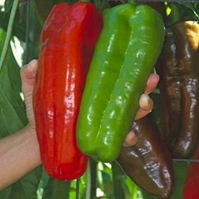 Giant Marconi Pepper Two Plants -- Non-GMO