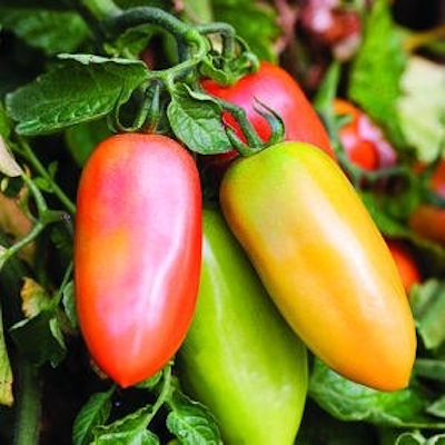 San Marzano Tomato Two Plants -- Non-GMO, Heirloom Roma