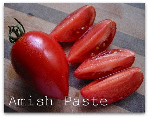 Amish Paste Tomato Two Plants – Non-GMO, Heirloom Plum