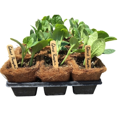 "54 Coco Fiber Seed Starter Pots (3.5"" Square) with Trays and 24 Wooden 6"" Label Tags"
