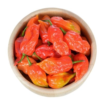 Ghost Bhut Jolokia Pepper - Two Plants -- Non-GMO, 900K Scoville Units - Hot, Hot, Hot!! FREE Priority Mail Shipping