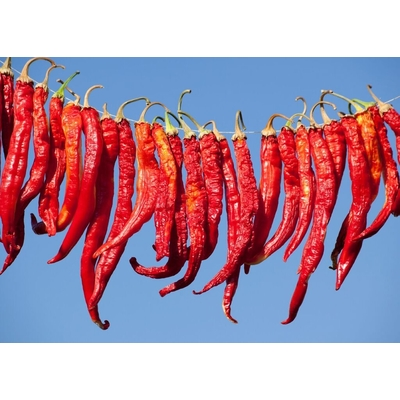 Cayenne Long Slim Pepper Plant | Two Live Garden Plants | Non-GMO, Medium Heat, Dries Well