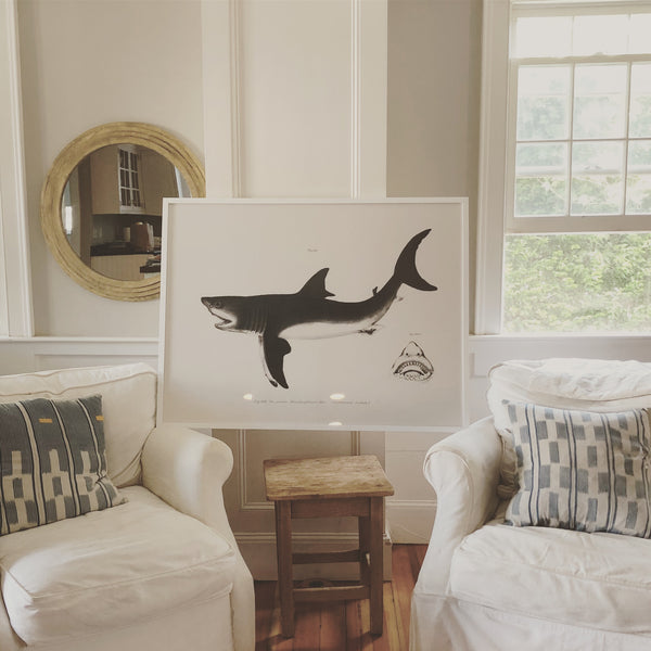 Framed Shark Print