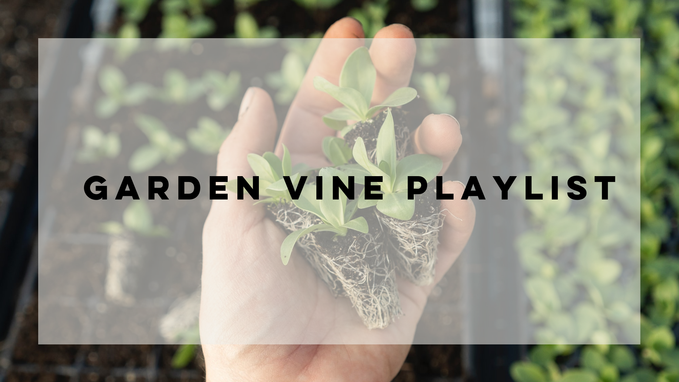 A playlist inspired by our Garden Vine scent   Noted Candles