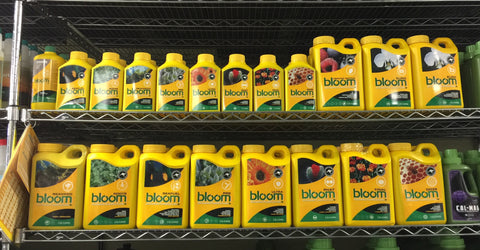 Bloom Yellow Bottles IN STOCK!