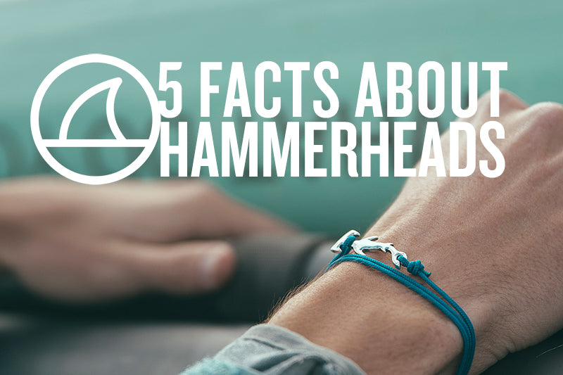 5 FACTS ABOUT HAMMERHEAD SHARKS