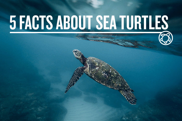5 FACTS ABOUT SEA TURTLES