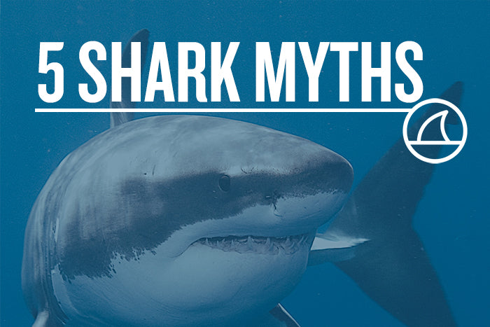 5 MYTHS ABOUT SHARKS
