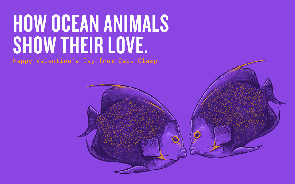 How Ocean Animals Show Their Love