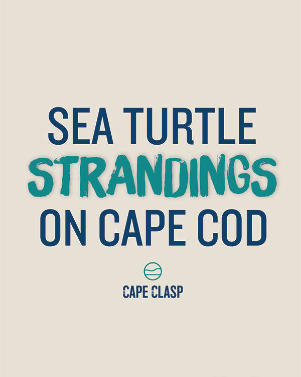 Why Are More Sea Turtles are Getting Stranded on Cape Cod?
