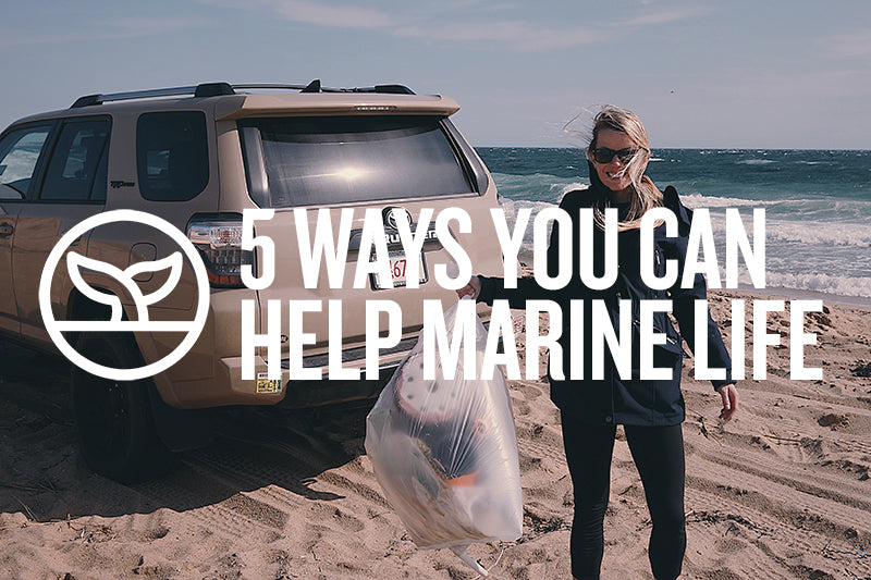 5 WAYS YOU CAN HELP MARINE LIFE