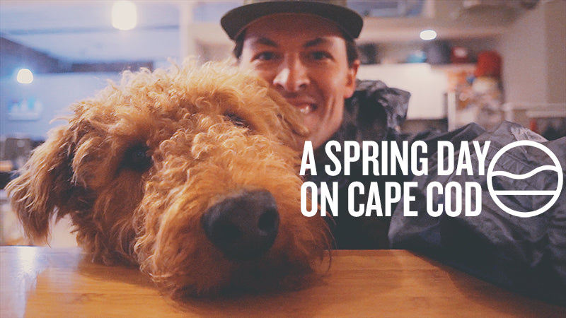 A SPRING DAY ON CAPE COD [VLOG]