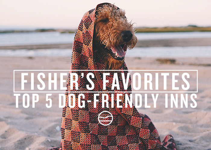 5 DOG-FRIENDLY INNS ON THE CAPE AND ISLANDS [FISHER'S FAVORITES]