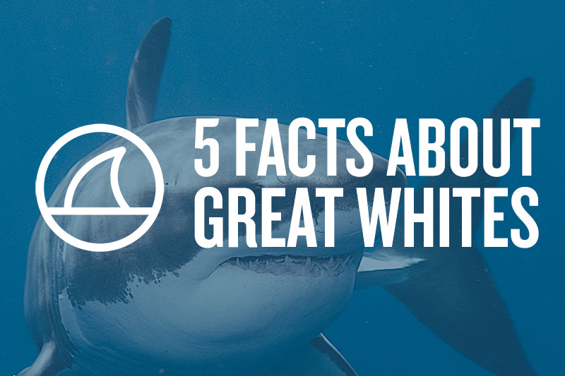 5 FACTS ABOUT GREAT WHITES