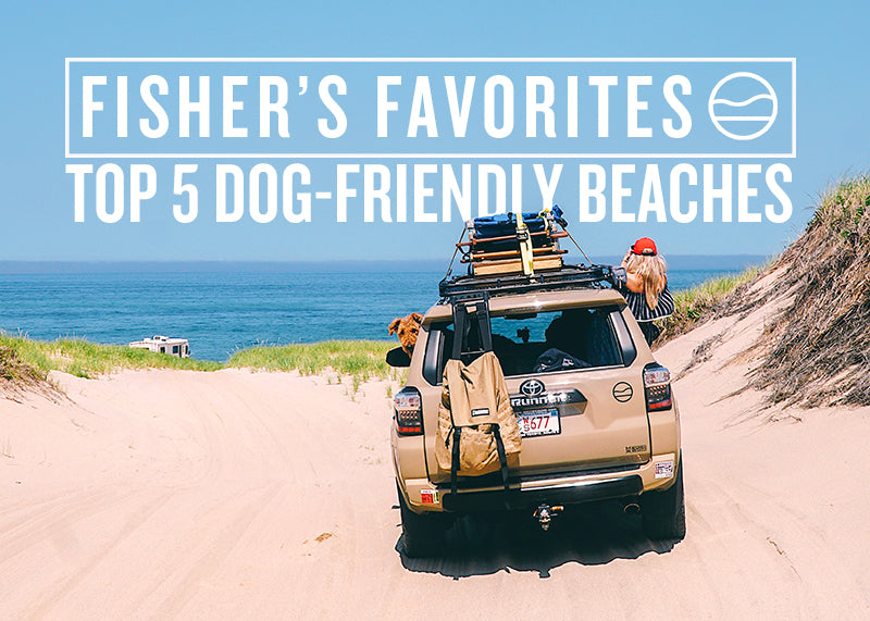 5 DOG-FRIENDLY BEACHES ON CAPE COD [FISHER'S FAVORITES]