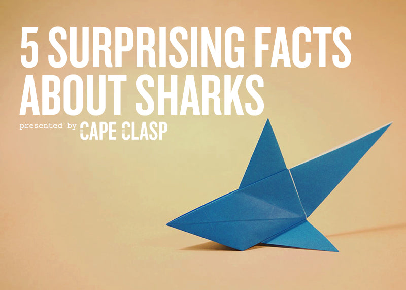 5 Surprising Facts About Sharks