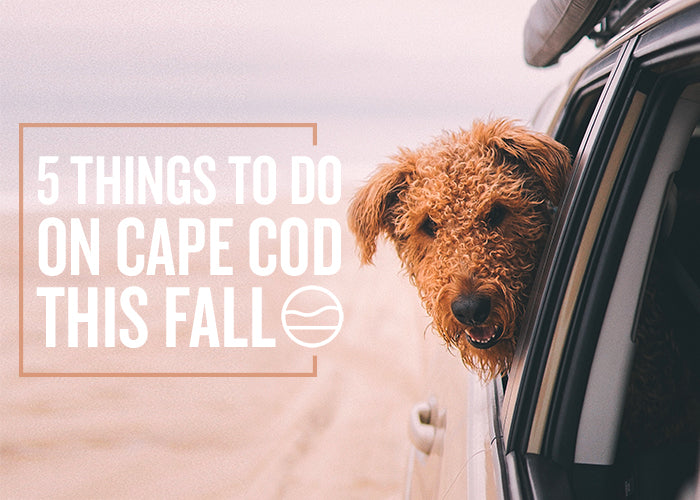 5 THINGS TO DO ON CAPE COD THIS FALL