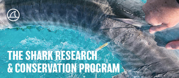 Shark Research and Conservation Program