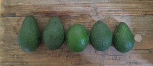 12 Hass Avocados