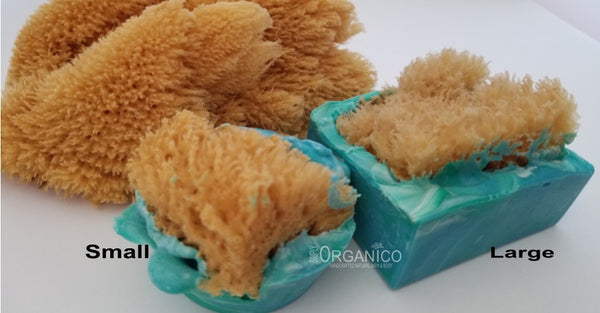 Sea Sponge Soap Handmade Handcrafted Natural Ocean Sea Blue Exfoliate Anti Bacterial