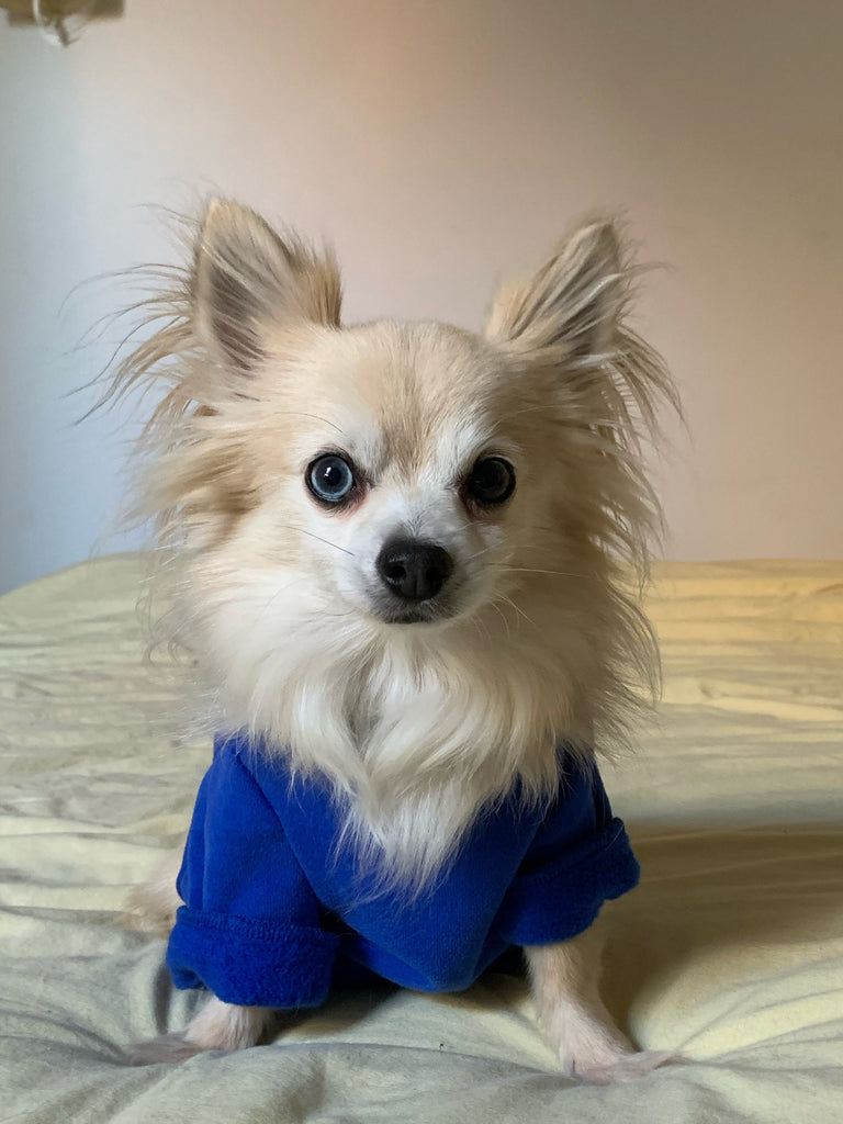 TWINNING blue pet sweatshirt
