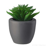 ASA Mini Succulents Decoration Plants in a Grey Porcelain Pot