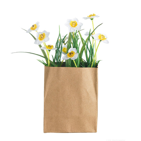 ASA Daffodils in a Rectangular Paperbag