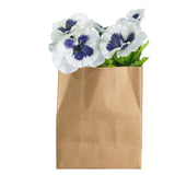 ASA Pansy in Rectangular Paperbag