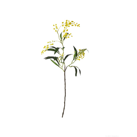 ASA Mimosa Yellow Branch