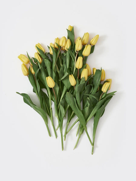 YELLOW TULIP finecutdelivery