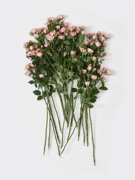 LIGHT PINK SPRAY ROSE spring16