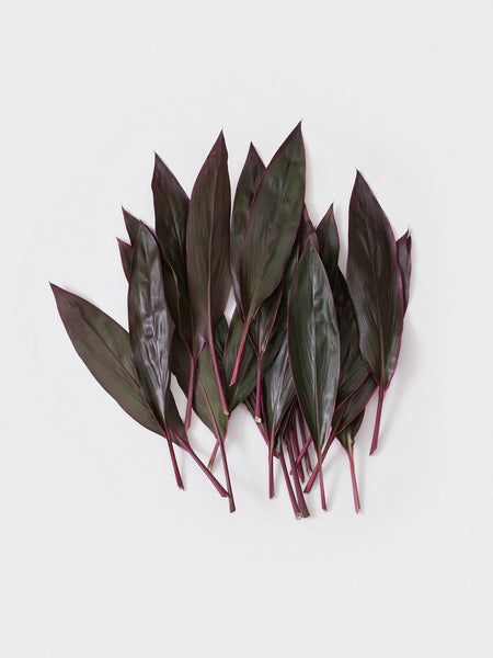 CORDYLINE LEAF summer16