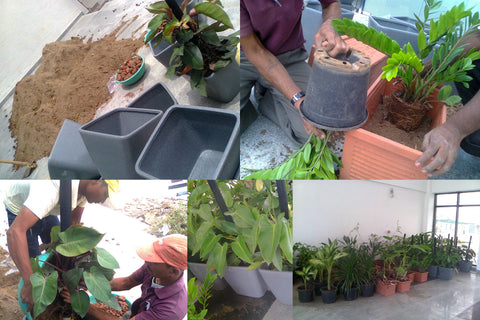 Pot Plant Preparation as per clientele need. Once pots are ready it is kept for delivery.