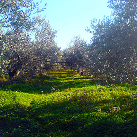 Our Olive Farm in Greece