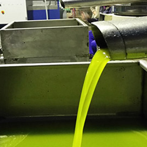 Olive oil as it comes out of the mill