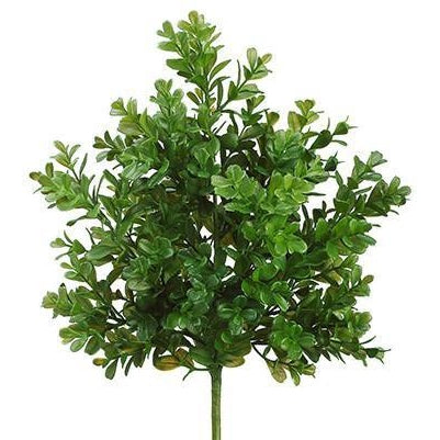 Boxwood Bush 15""