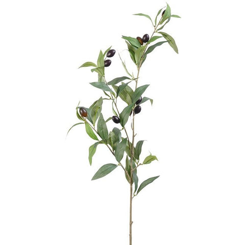 Olive Branches S/3