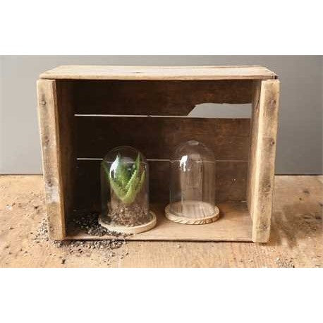 Glass Cloche & Wood Base - Set of Two